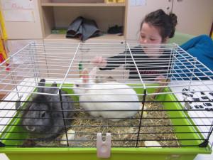 Terapija s pomočjo živali v razvojnem oddelku